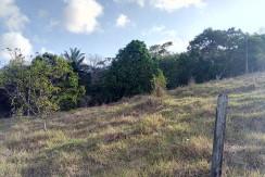 Granja com 4,5 hectares em São Lourenço da Mata